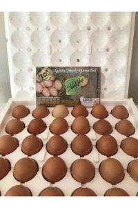 AdaBahçe Gezen Tavuk Yumurtası