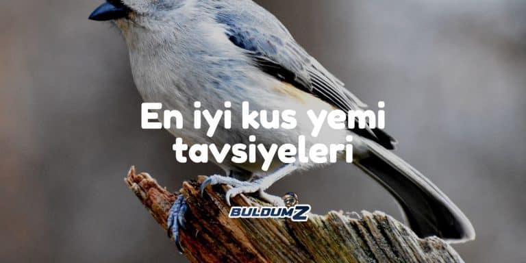 en iyi kuş yemi