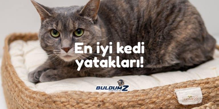 en iyi kedi yatağı