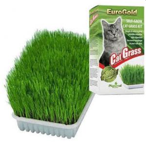 Garden Mix – Kedi Çimi