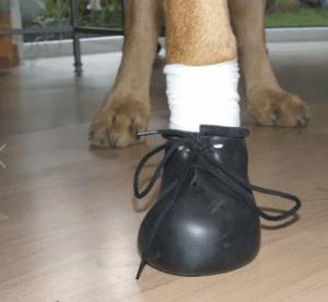 Sprenger – Kauçuk Köpek Botu