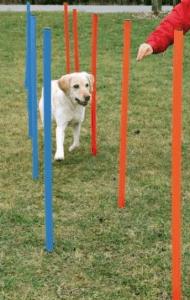 Trixie – Köpek Agility Eğitim Direkleri