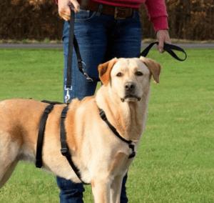 Trixie – Kolay Kontrol Köpek Göğüs Tasması